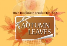 free-brush-autumn-leaves
