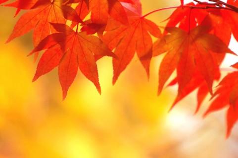透明感のある鮮やかな赤が綺麗 ... : 未年年賀状イラスト : イラスト