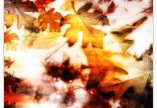 free-photoshop-burush-corner-red-leaves