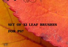 free-ps-leaf-photo-brushes