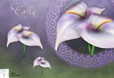 free-icon-beautifle-calla-zurbaua