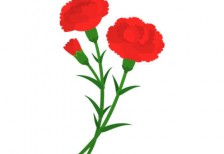 free-illustration-beautiful-carnation