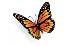 free-illustration-butterfly-schmetterling
