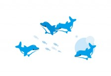 free-illustration-set-dolphin