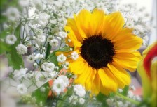 free-photo-sunflower-bouquet