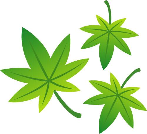 フリー素材 まだ色づく前の緑色のモミジを描いたフリーイラスト