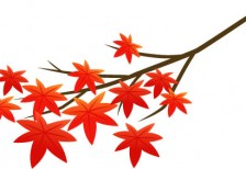 free-illustration-momiji-red-eda