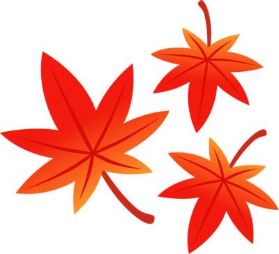 赤く紅葉したもみじの葉を描いたイラスト。秋のデザインに。