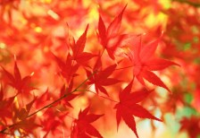 free-photo-autumn-leaves-beiz-l06342