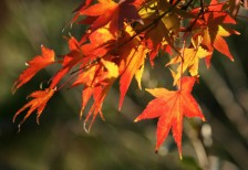 free-photo-autumn-leaves-beiz-l06561