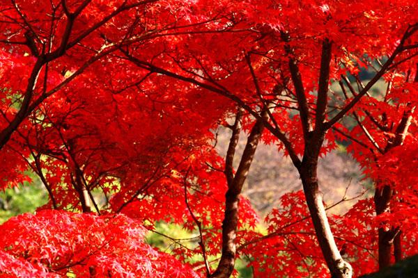 【これを見ればカンペキ】日帰り登山で大山に紅葉を見にいこう!