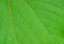 free-photo-green-leaves-beiz-l02694