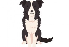 free-illustration-dog-border-collie