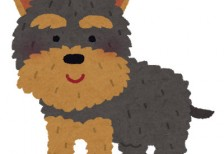 free-illustration-dog-yorkshire-terrier-irasutoya