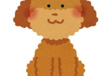free-illustration-toy-poodle-irasutoya