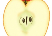 free-illustration-cut-fruit-apple-irasutoya