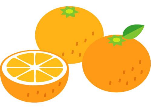 フリー素材 カットしたオレンジや葉のついたみかんなどを並べて描いたベクターイラスト