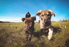 free-photo-little-puppies-friends-picjumbo
