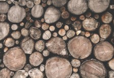 free-photo-wood-and-forest-graphicburger